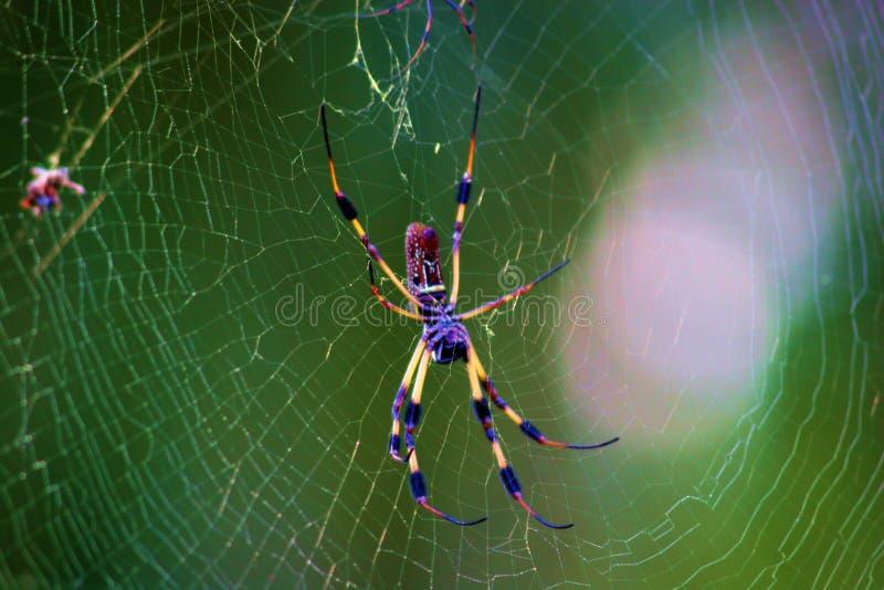 中央五颜六色的佛罗里达蜘蛛 免版税库存照片