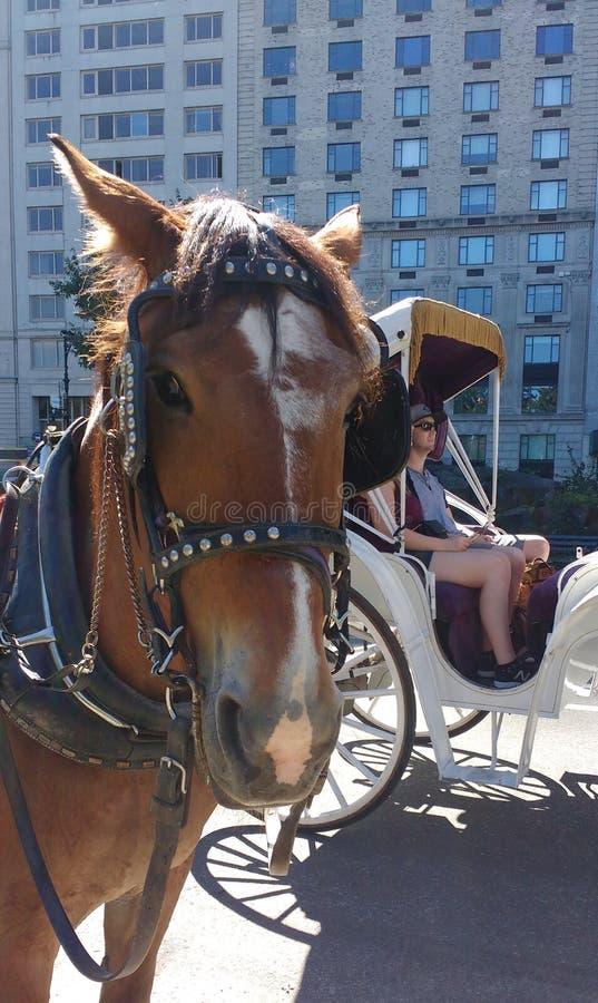 中央公园、马和支架乘驾, NYC, NY,美国 免版税图库摄影