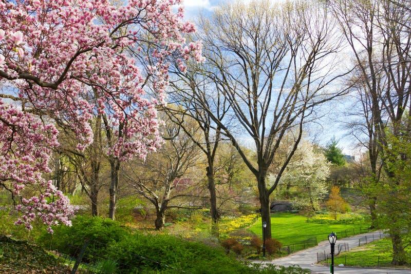 中央公园春天风景NYC 免版税库存照片