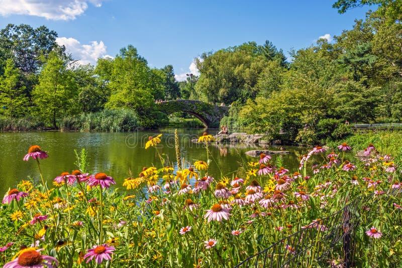 中央公园鸭子池塘 库存图片