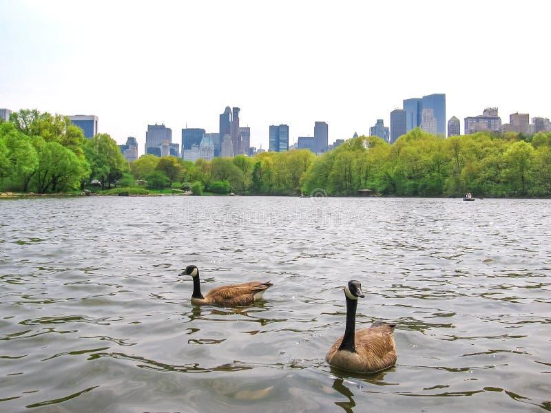 中央新的公园约克 库存图片