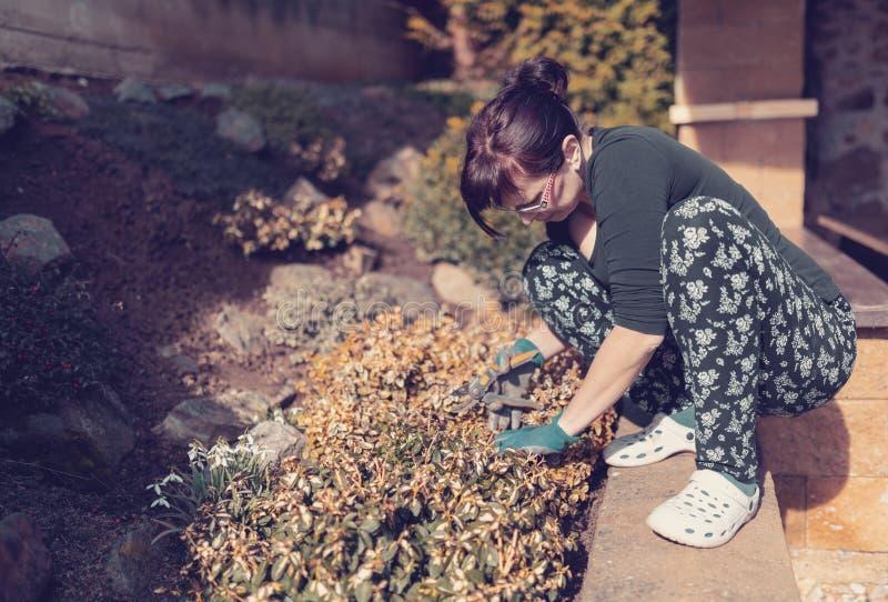 中年妇女花匠在春天庭院里 免版税库存照片