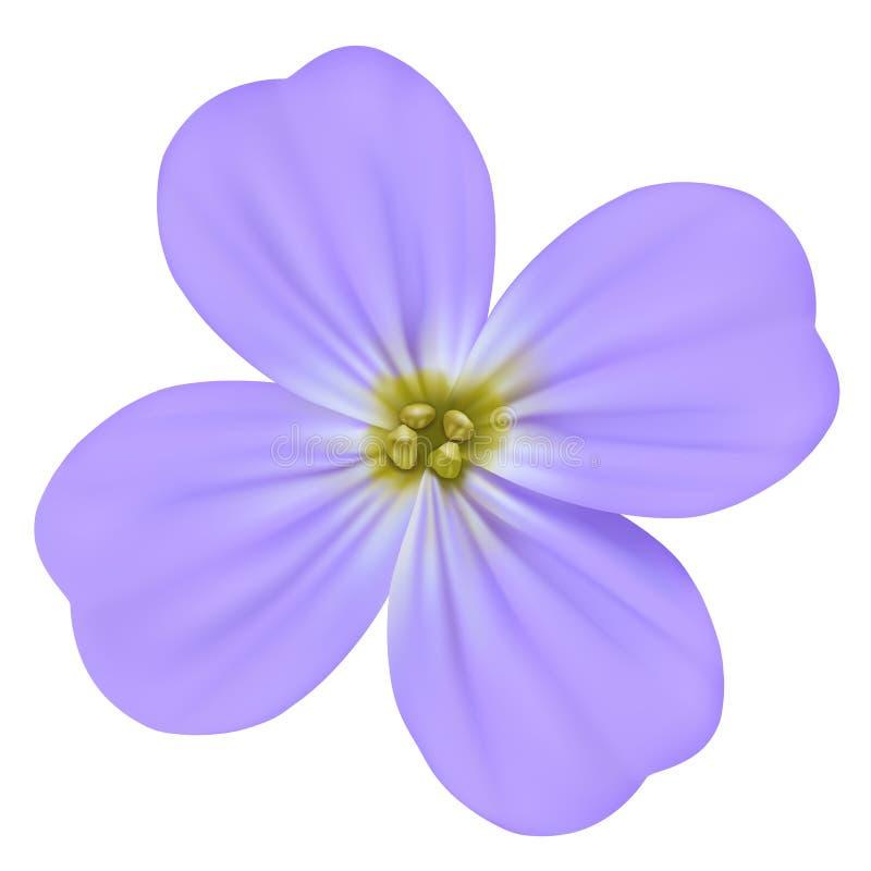 中提琴odorata、香堇菜、英国紫罗兰、共同的紫罗兰或者被隔绝的庭院紫罗兰传染媒介开花的蓝色花 免版税库存图片