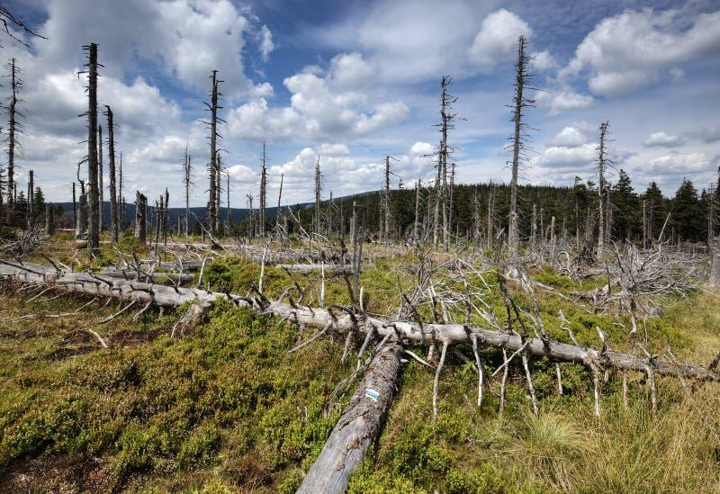 中断的森林 免版税库存照片