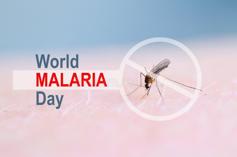 中止,禁止在蚊咬人的皮肤的标志,在昆虫胃的人血 世界疟疾天 库存图片
