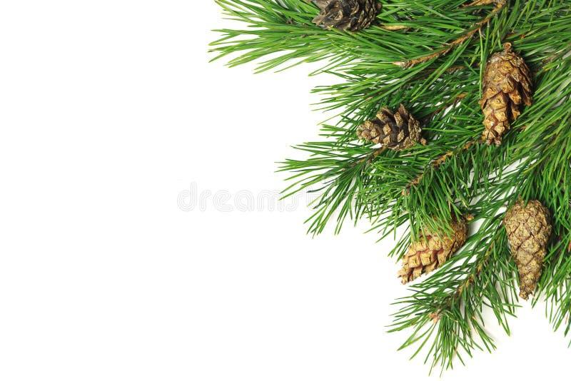 中看不中用的物品蓝色圣诞节构成玻璃 圣诞树分支,杉木锥体,冷杉在白色背景分支 库存图片