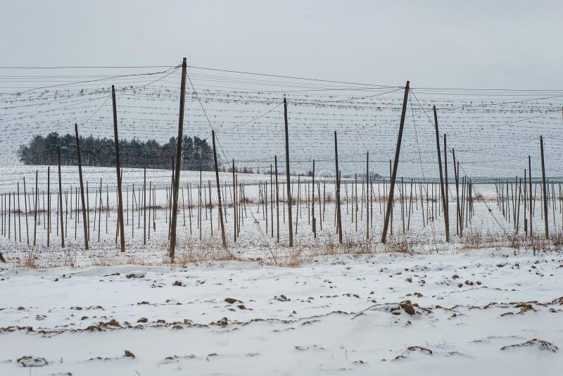 中继字段生产农厂种植园啤酒种植者支持冬天雪 库存照片