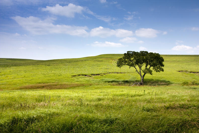 中西部堪萨斯Tallgrass大草原蜜饯的平静的自然风景 免版税库存照片