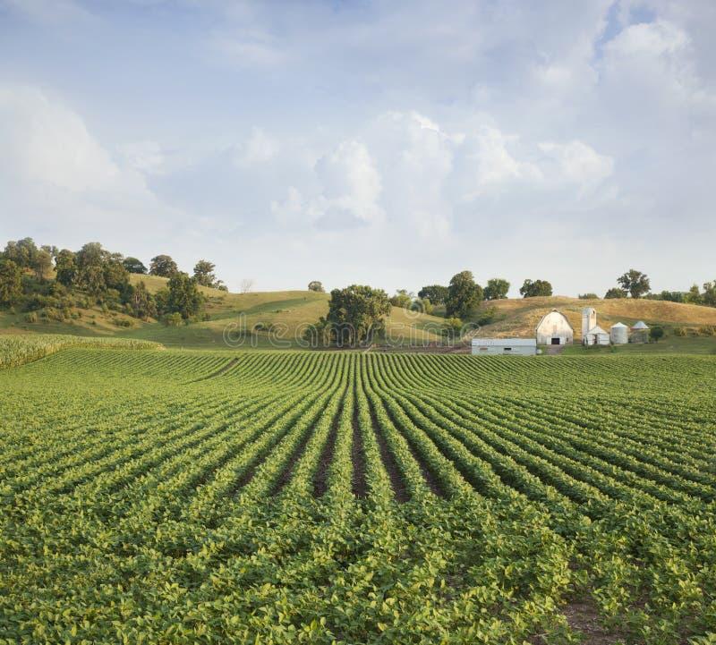 中西部的大豆领域和农厂小山 免版税库存照片