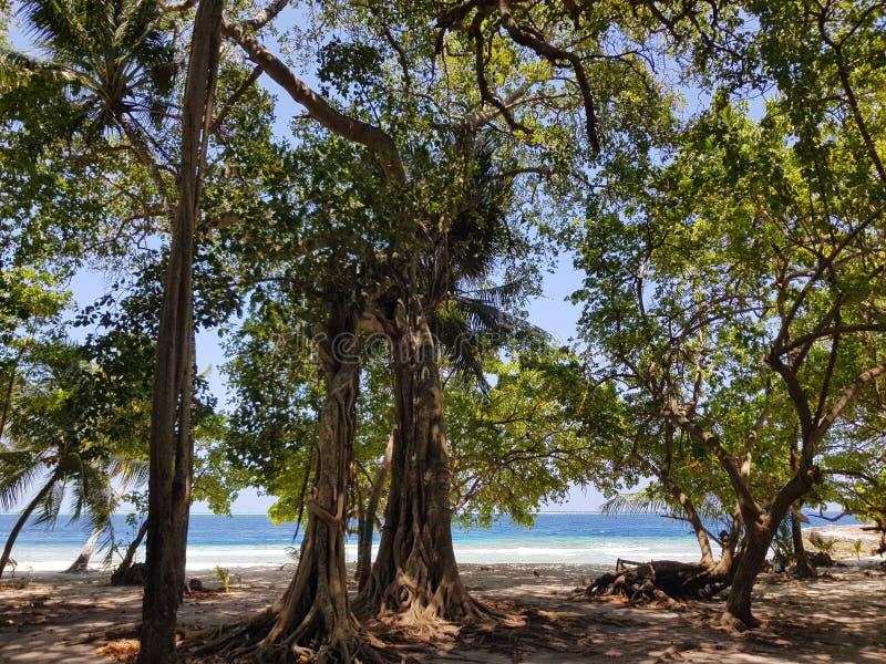 丰富多样的树 库存照片
