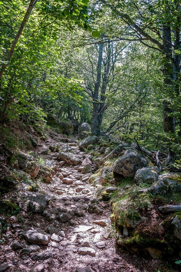 丰特斯Carrionas国立公园的风景  帕伦西亚 免版税图库摄影