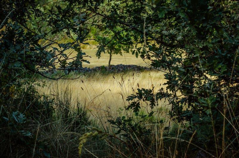 丰特斯Carrionas自然公园的美好的角落  E 图库摄影