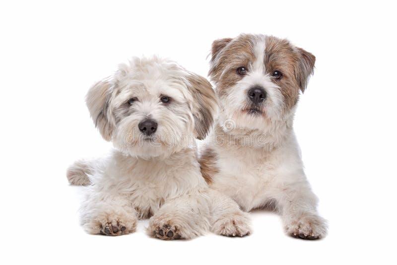 临时工品种狗混合 库存照片
