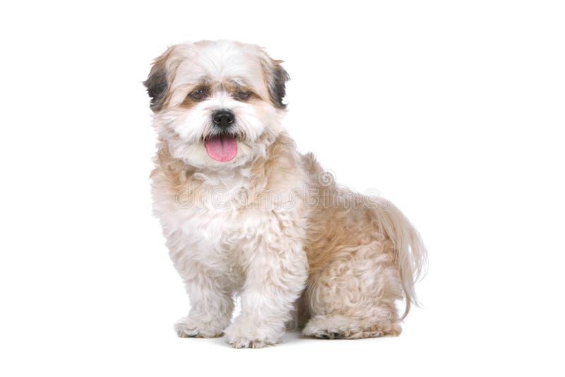 临时工混合的品种狗 库存图片