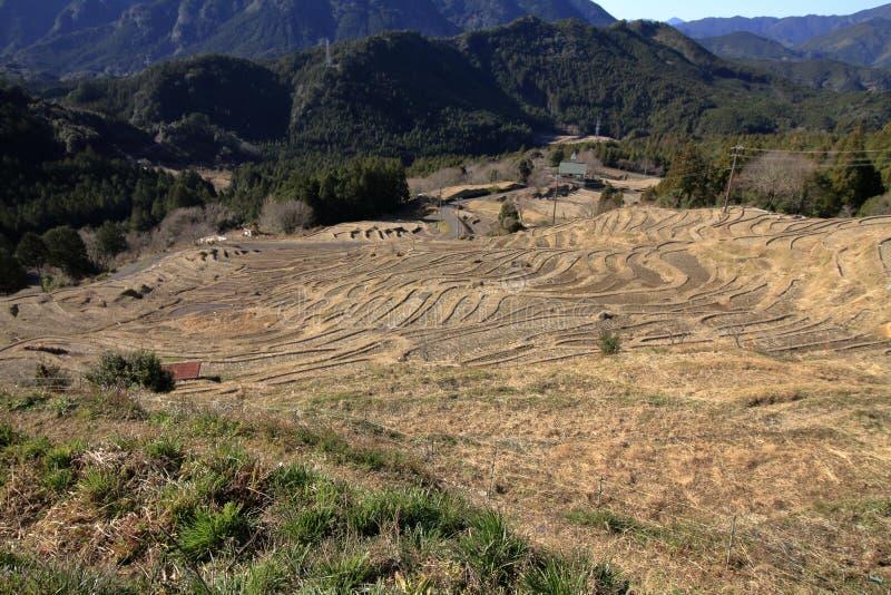 丸山露台的米领域 免版税库存照片