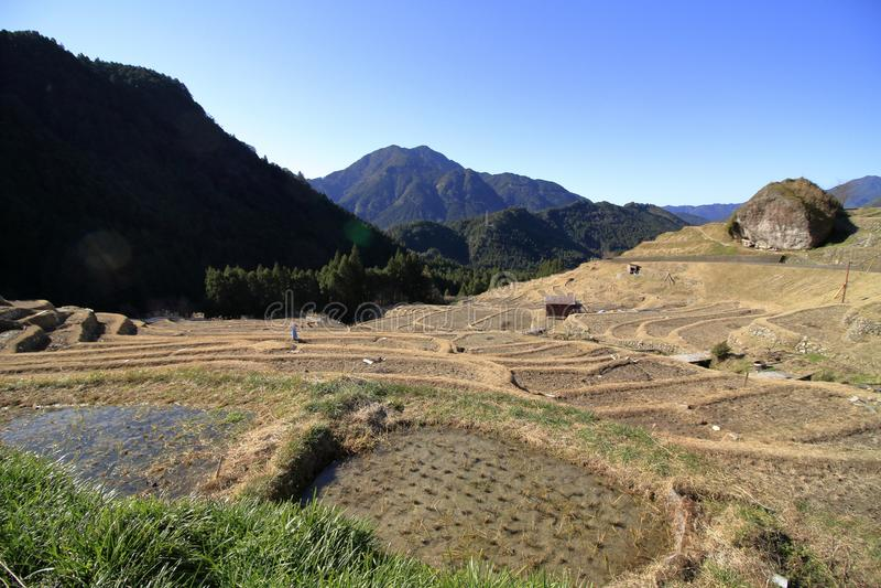 丸山露台的米领域 图库摄影
