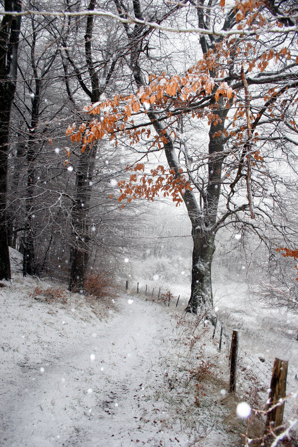 丹麦冬天 免版税图库摄影