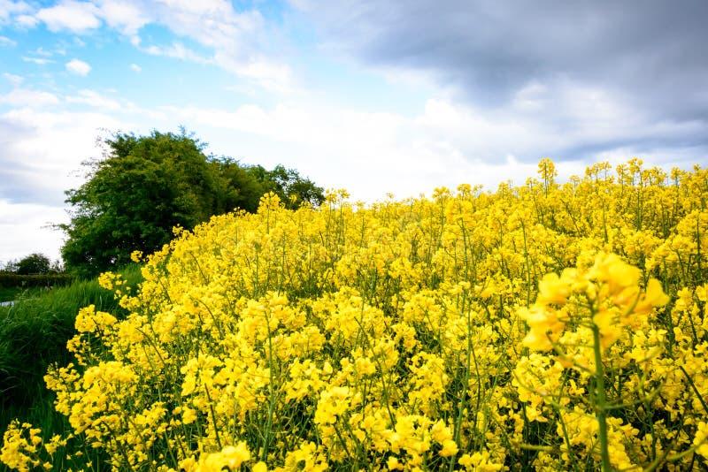 丹麦夏天风景 免版税库存照片