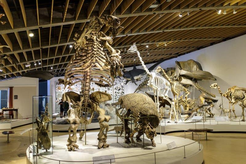 丹麦-西兰地区-哥本哈根-自然历史博物馆- 免版税图库摄影