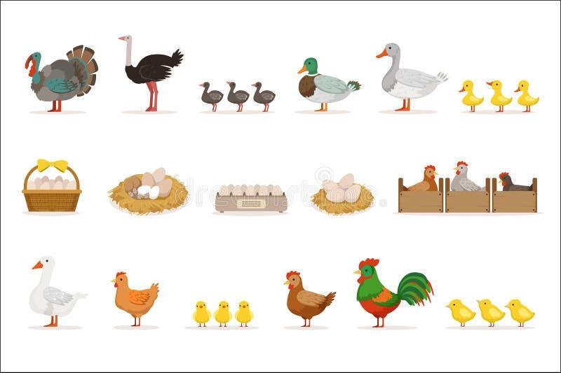 为下鸡蛋增长的为肉和农厂鸟,有机耕田套与动物的传染媒介例证 库存例证