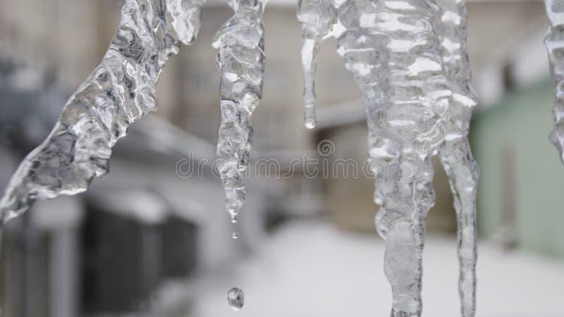 为与水晶纹理的冰柱关闭在冬天背景 E 下跌从清楚的水下落 免版税库存照片