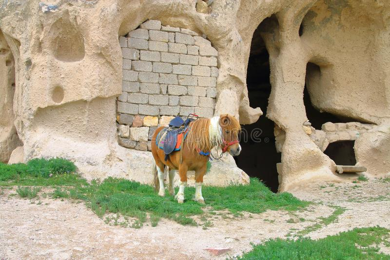 为乘坐装备的小马在洞解决 免版税库存图片