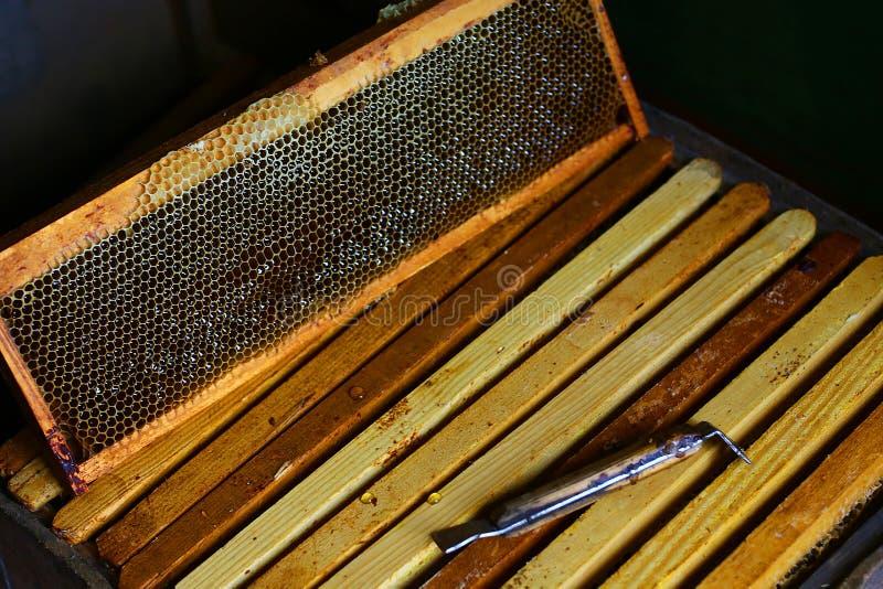 为养蜂业和蜂蜜辅助部件的工具 与蜂充分蜡结构的框架在蜂窝的新鲜的蜂蜂蜜 顶视图 复制sp 库存照片