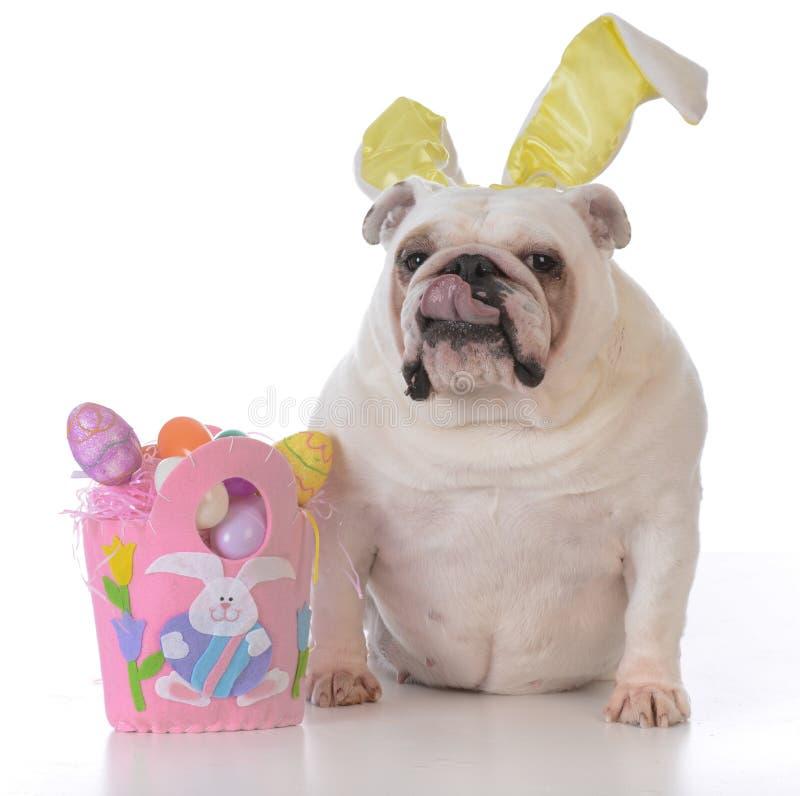 为复活节装饰的狗 库存图片