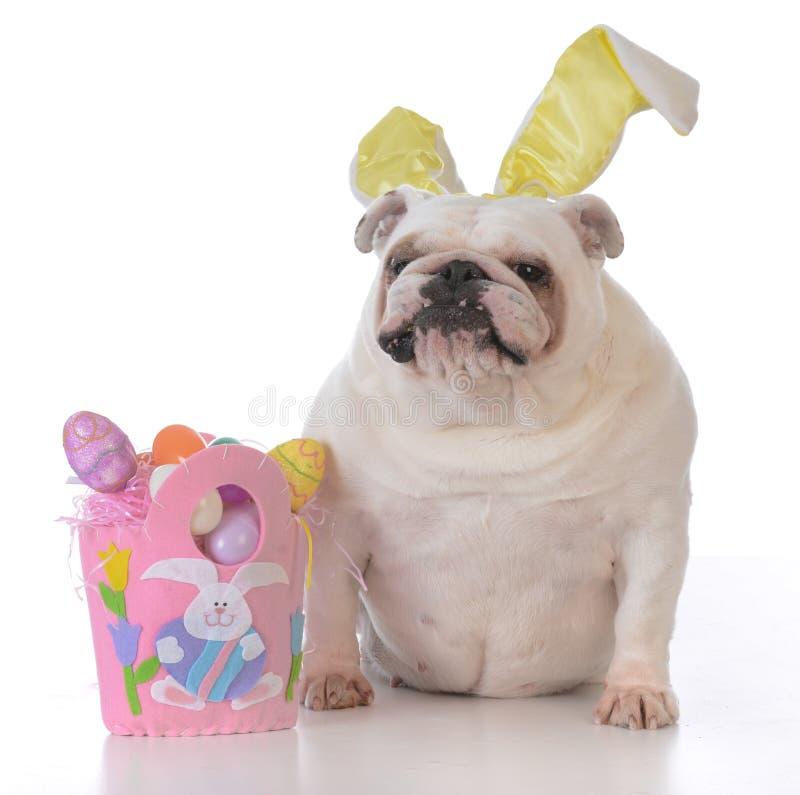 为复活节装饰的狗 免版税库存照片