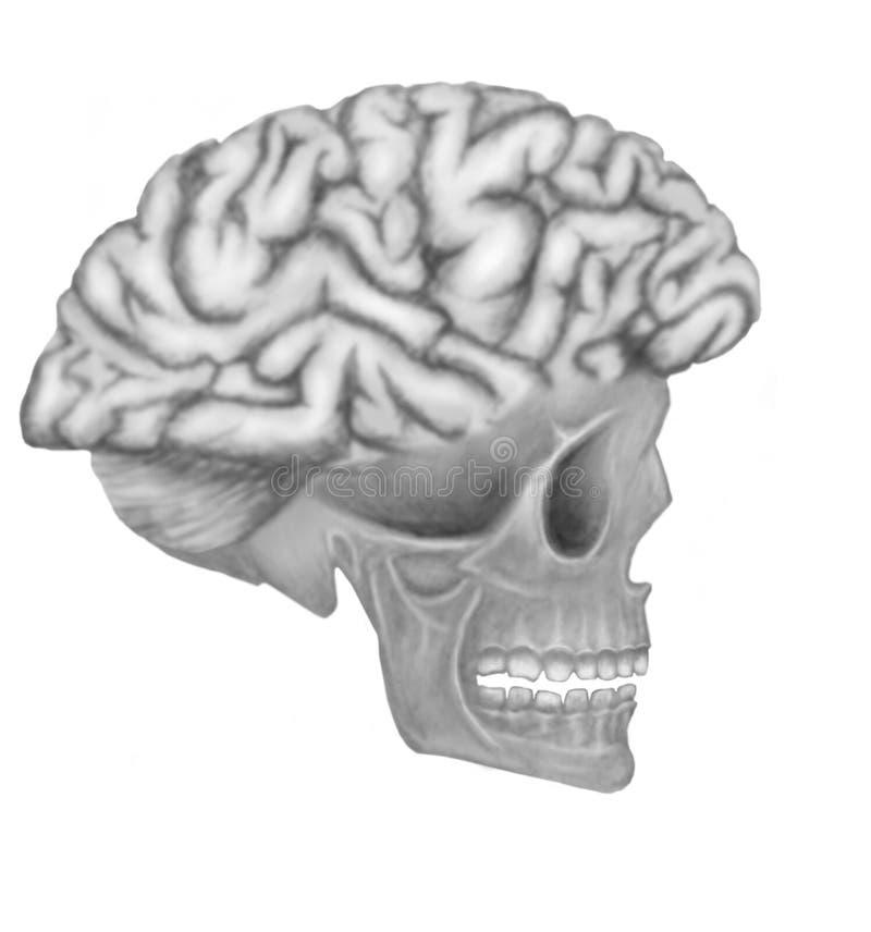 为大脑子 库存例证