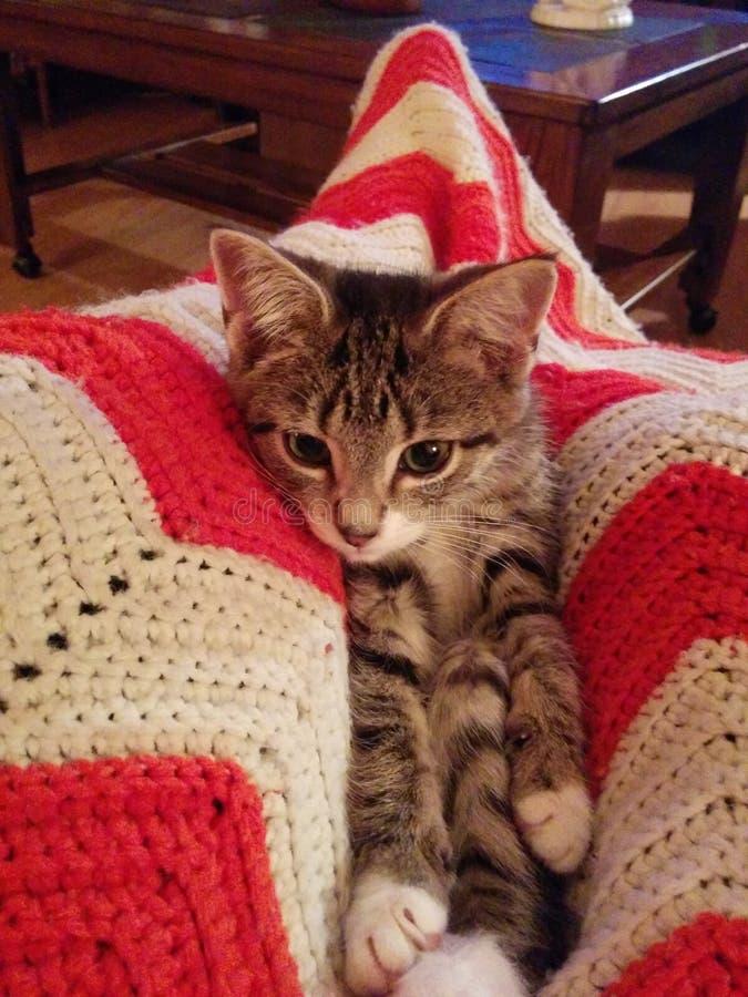 为小猫照相 免版税图库摄影