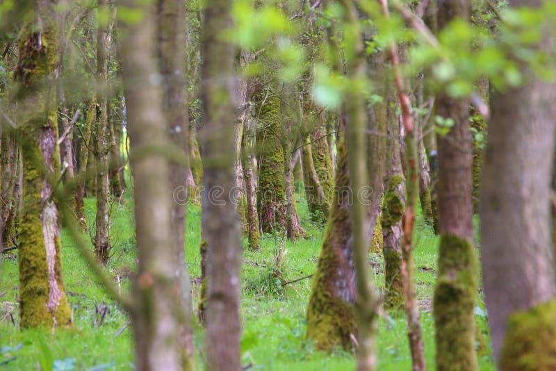 为树看不到木头 免版税库存照片