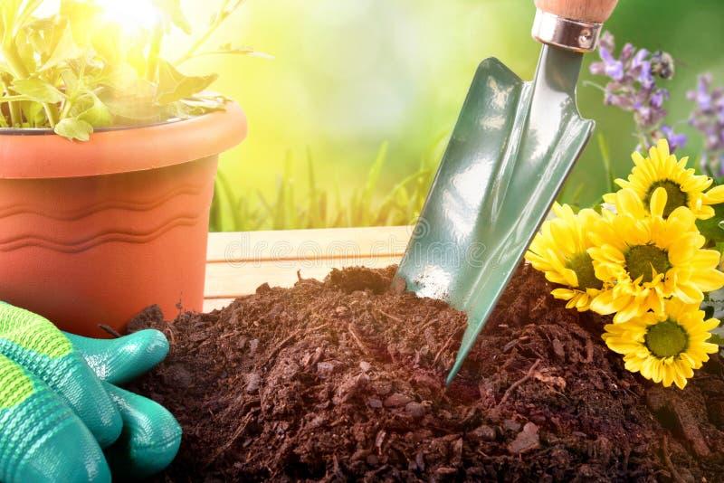 为植物的园艺工具和花和绿色背景出口 库存照片