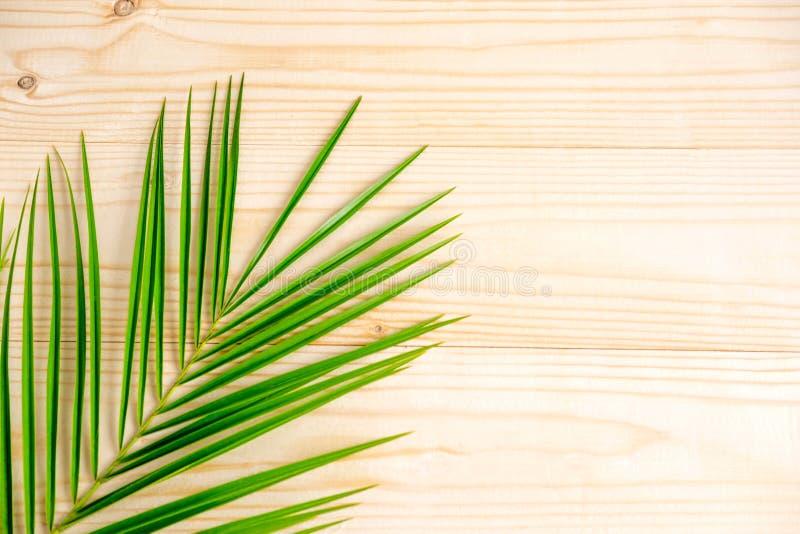 为横幅的依据与棕榈叶 热带横幅设计 文本的框架与棕榈树叶子在木的 免版税库存照片