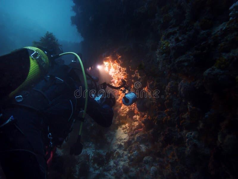 为海洋生物照相的轻潜水员 图库摄影
