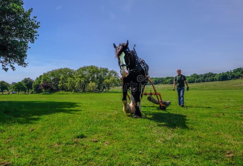 为马采伐使用的夏尔马 免版税库存图片