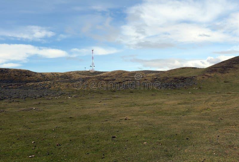 为绵羊吃草在喀麦隆村庄  del fuego tierra 免版税库存照片