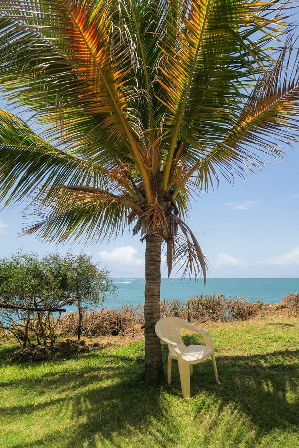主持underneeth一棵棕榈树有在海洋的看法-最好 免版税图库摄影