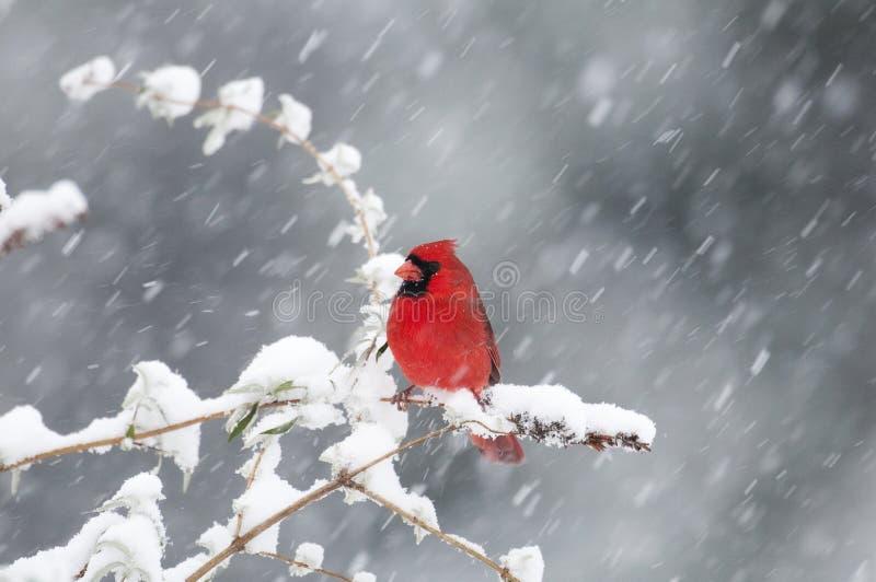 主要北雪风暴