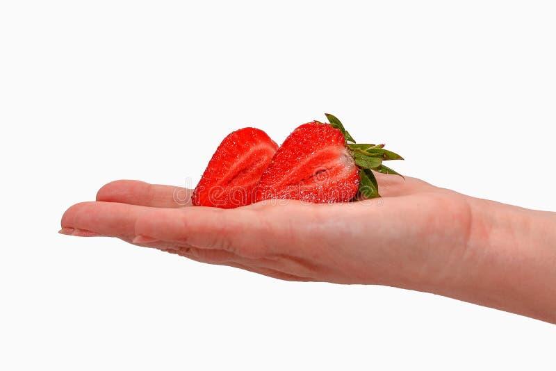 举行在手成熟新鲜的草莓的妇女隔绝在白色 图库摄影