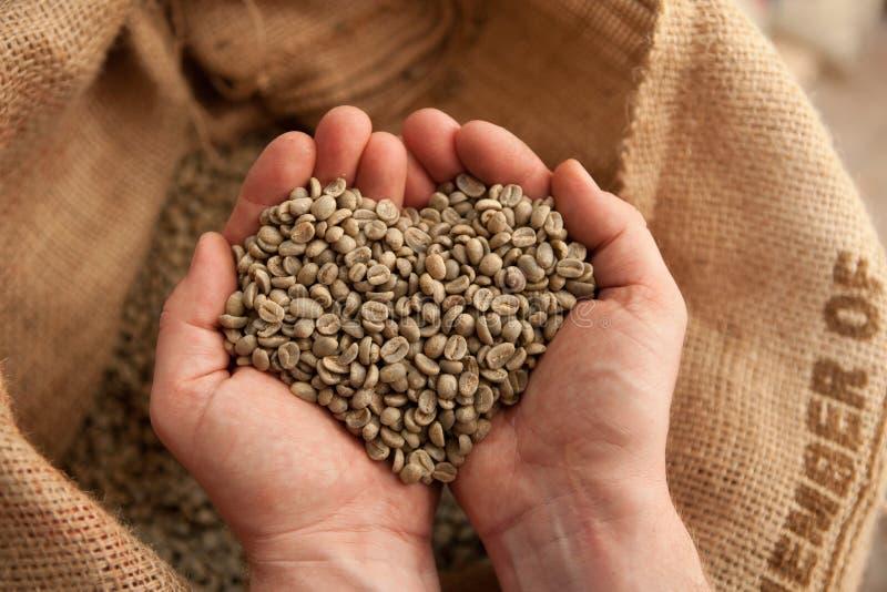 举行在手-心脏上的未加工的咖啡豆- coffeelover 免版税库存图片