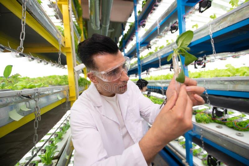 举行绿色的男性农业学家,当种植自温室时 库存图片