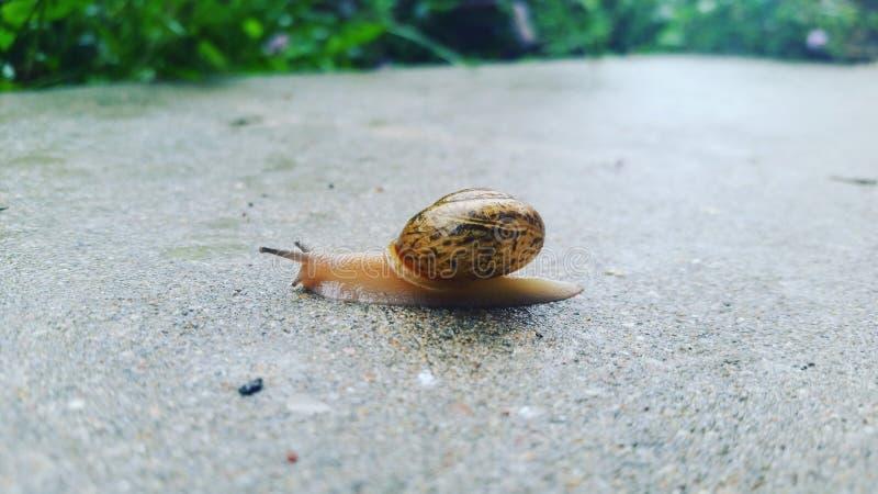 之后雨蜗牛 库存照片