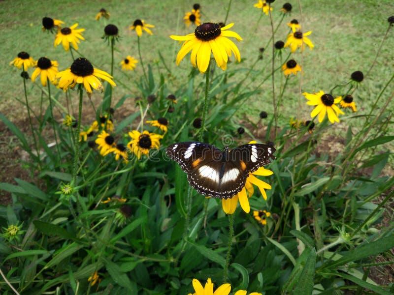 之间蝴蝶黄色花 库存图片