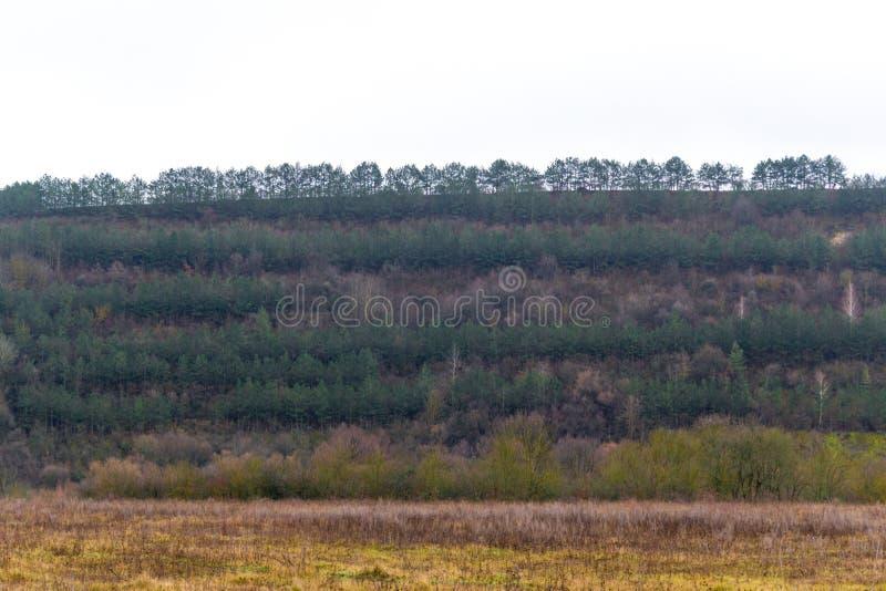 乌克兰人的云杉的冷杉森林 能承受的清楚的生态系 免版税库存图片