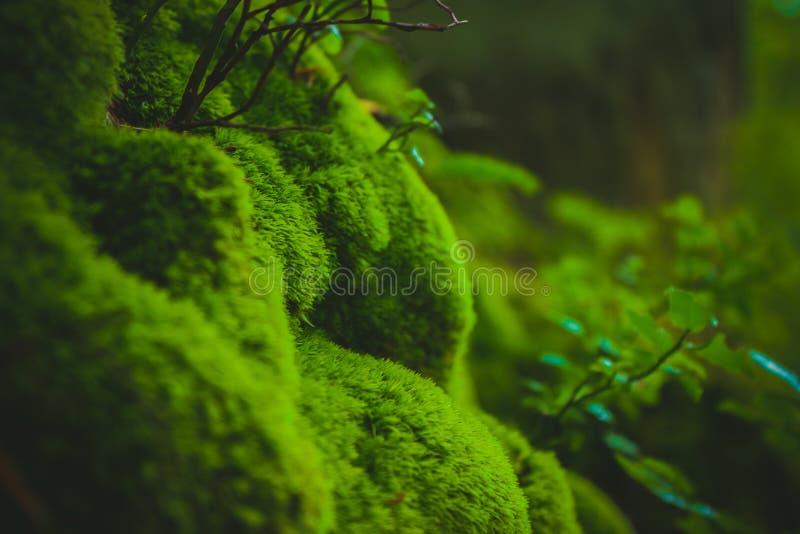 乌克兰森林 免版税库存照片