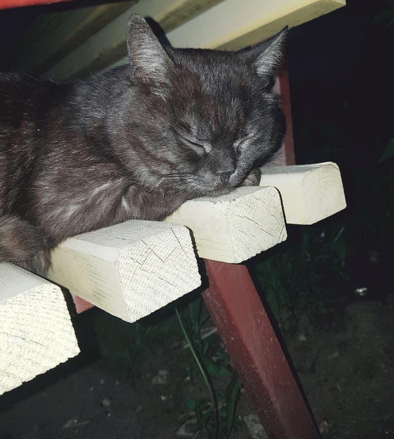 乌克兰的动物区系 恶意嘘声,猫在一黄色木lavachke睡觉 动物折叠了前面爪子在头下,眼睛是 免版税库存图片