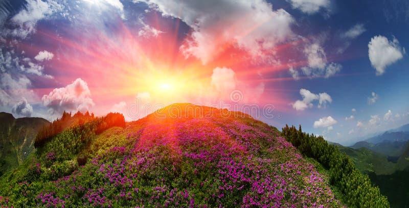 乌克兰的开花的山 库存图片
