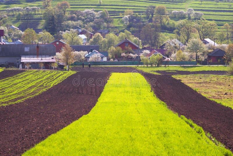 乌克兰的肥沃土地 库存图片