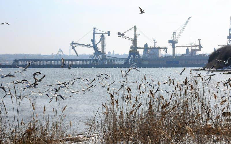 乌克兰, Chernomorsk - 2018年, 3月03日:在Th的冬天水鸟 免版税图库摄影